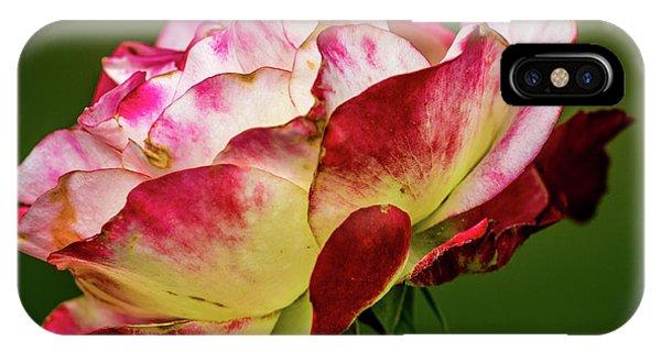 Multi-colored Rose IPhone Case
