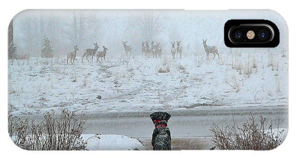 Murphy Watches The Deer IPhone Case