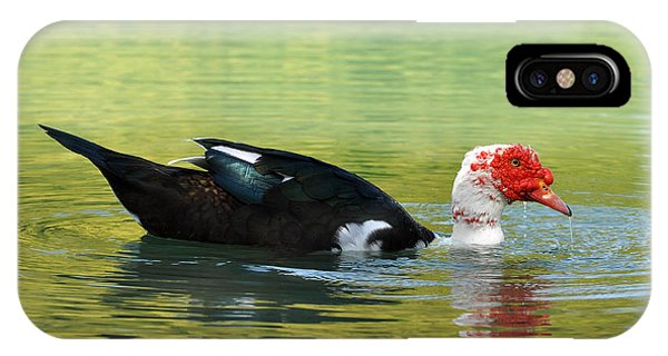 Muscovy Red Phone Case by Teresa Blanton