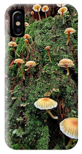 Mushroom Colony IPhone Case
