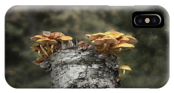 Mushrooms Atop Birch IPhone Case