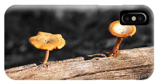Mushrooms On A Branch IPhone Case