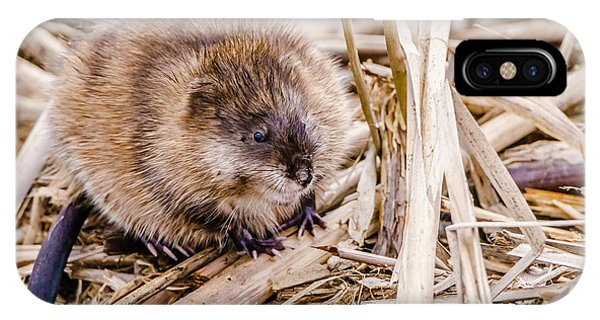 IPhone Case featuring the photograph Muskrat Ball by Steven Santamour