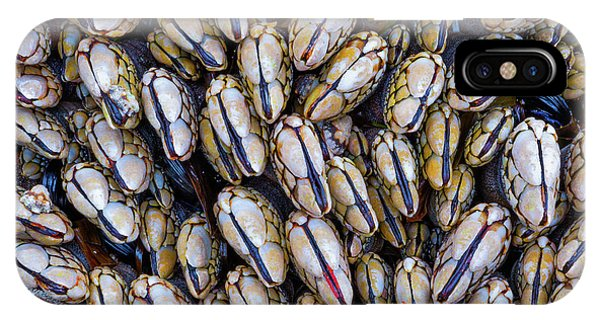 IPhone Case featuring the photograph Mussel Grouping by Darren White