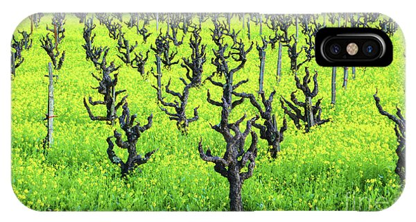 Mustard Flowers In The Vineyards IPhone Case