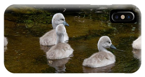 Mute Swan Babes IPhone Case