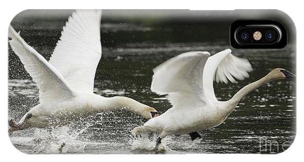 Mute Swan Intimidation IPhone Case