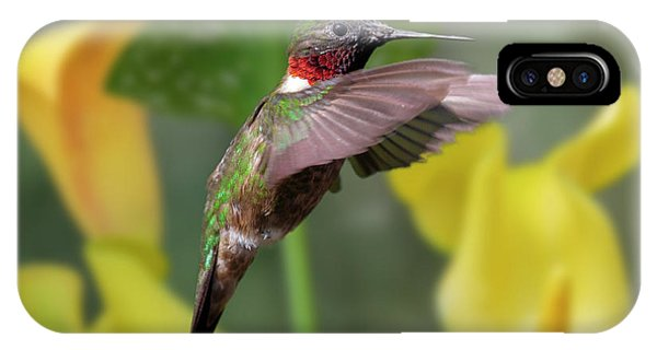 Humming Bird iPhone Case - My Curious Fellow by Betsy Knapp
