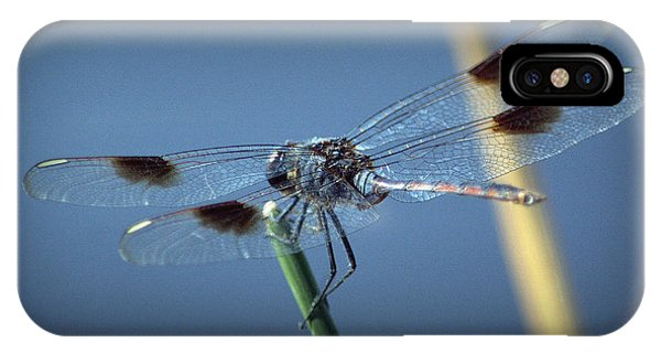 My Favorite Dragonfly IPhone Case