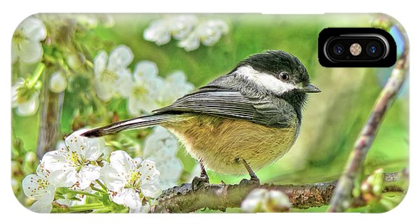 Avian iPhone Case - My Little Chickadee In The Cherry Tree by Jennie Marie Schell