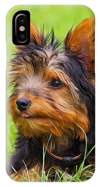 My Little Dog IPhone Case