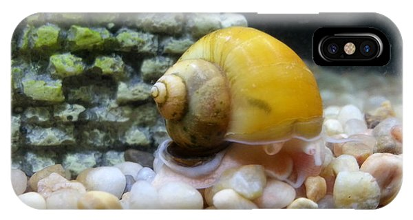 Mystery Snail IPhone Case