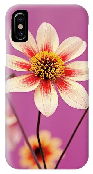 Mystic Dahlia IPhone Case