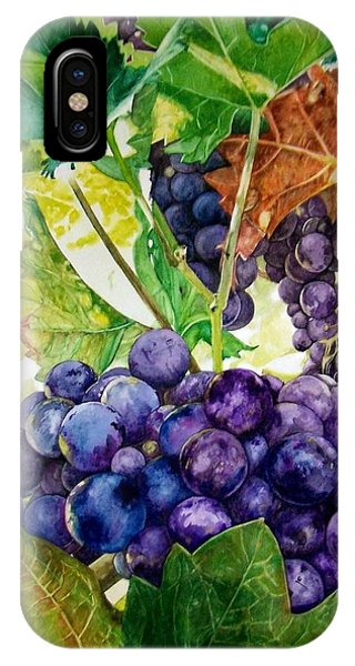 Napa Harvest IPhone Case