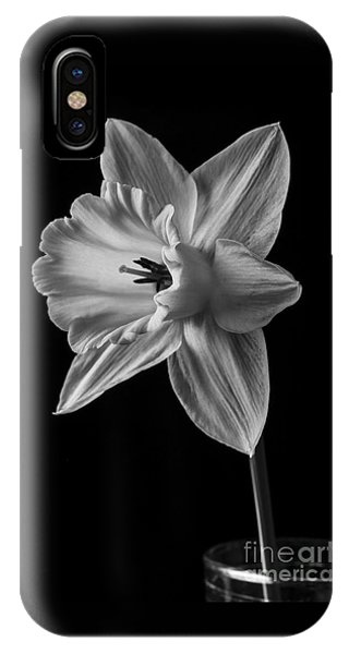 Yellow Trumpet iPhone Case - Narcissus Flower by Edward Fielding
