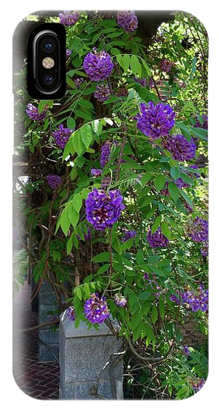 Native Wisteria Vine I IPhone Case