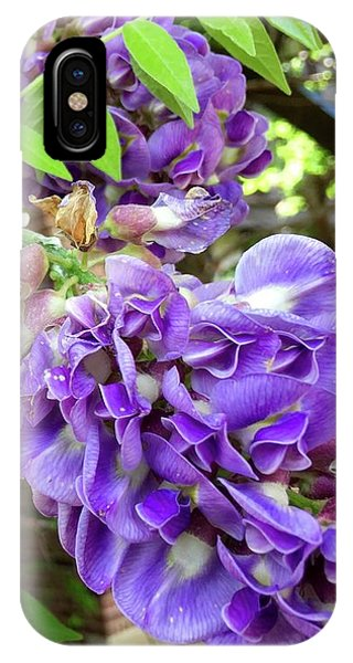 Native Wisteria Vine II IPhone Case