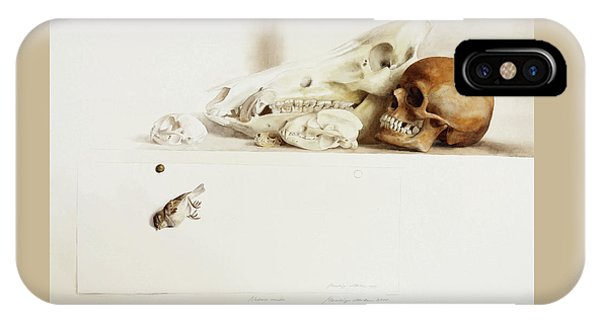 Nature Morte IPhone Case