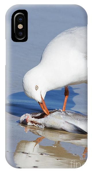 Natures Pecking Order IPhone Case