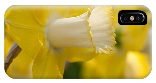 Yellow Trumpet iPhone Case - Nature's Trumpet by Charles Dobbs