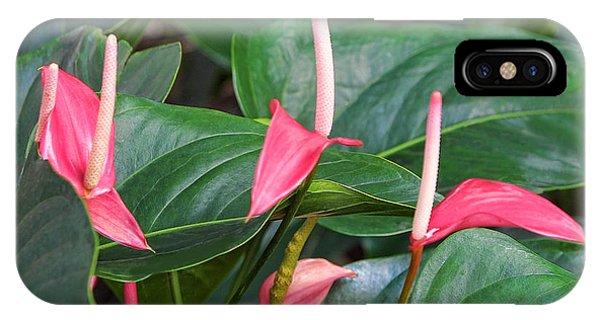 Naural Asapanthus Flowers IPhone Case