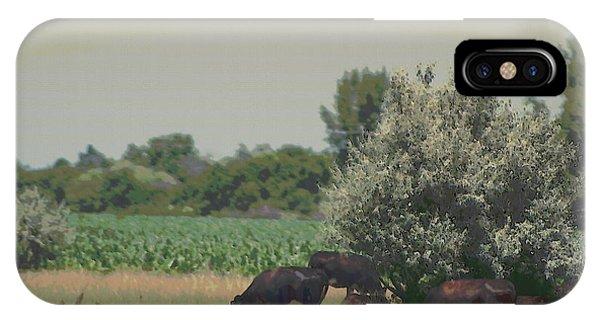 Nebraska Farm Life - Black Cows Grazing IPhone Case