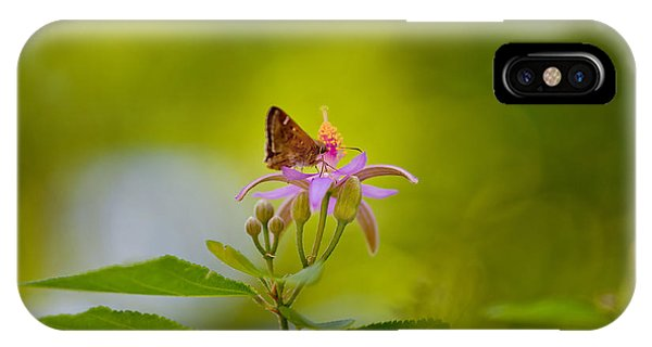 Moth iPhone Case - Nectar Treat by Az Jackson