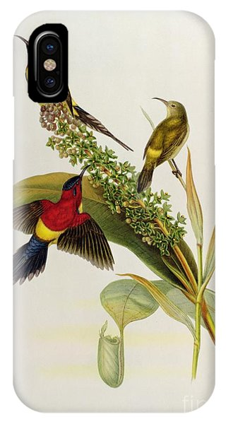 19th Century iPhone Case - Nectarinia Gouldae by John Gould