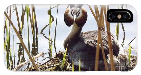 Nesting Grebe IPhone Case