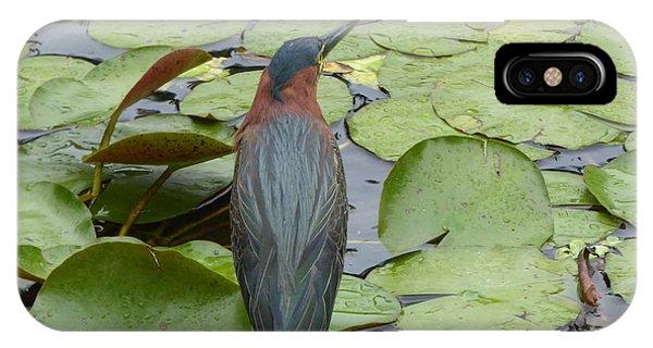 Nevis Bird Observes IPhone Case