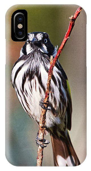 New Holland Honeyeater  IPhone Case