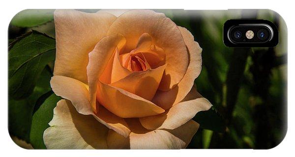 New Rose IPhone Case