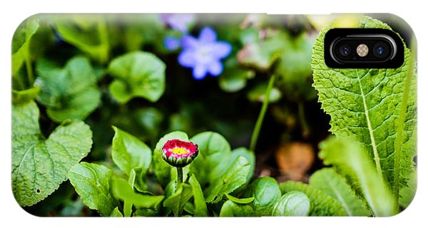 New Season For Bellis Perennis Bellissima Red IPhone Case