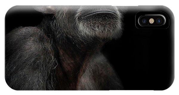 Chimpanzee iPhone Case - Noble by Paul Neville