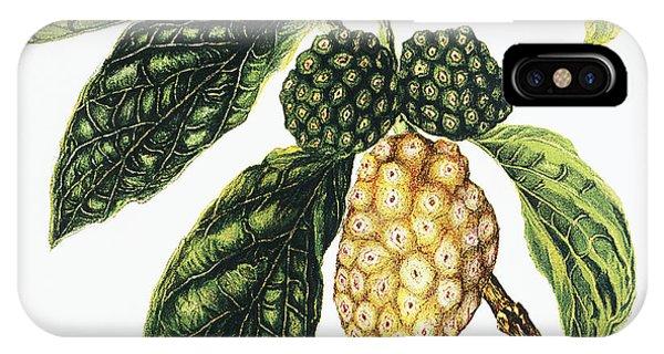 Noni Fruit IPhone Case