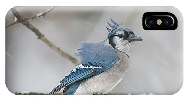 Nor' Easter Blue Jay IPhone Case