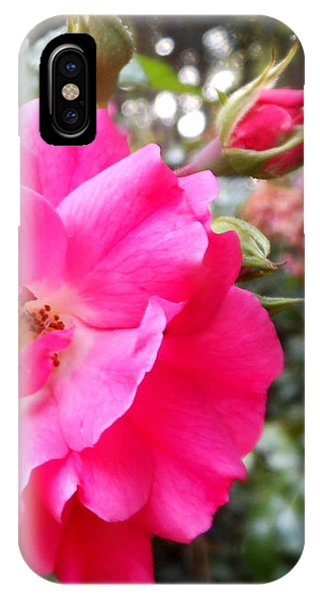 Nora's Knockout Roses IPhone Case