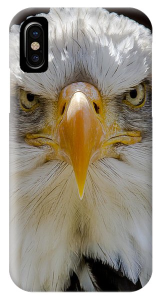 North American Bald Eagle  IPhone Case