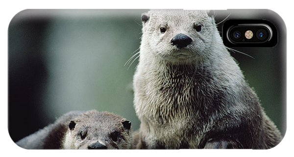 North American River Otter Lontra IPhone Case