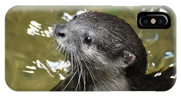 North American River Otter Swimming In A River IPhone Case