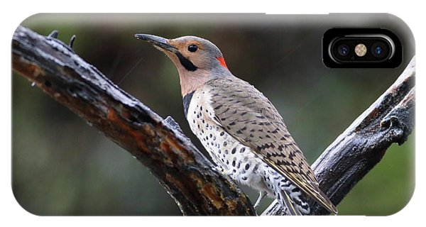 Northern Flicker In Rain IPhone Case