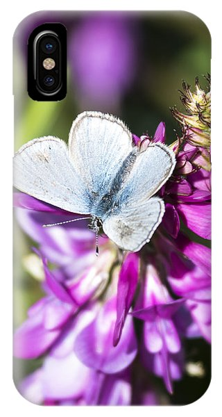 Northern Blue Butterfly IPhone Case