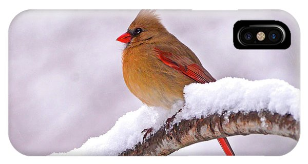 Northern Cardinal In Winter IPhone Case