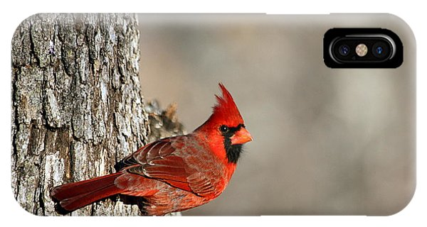 Northern Cardinal On Tree IPhone Case