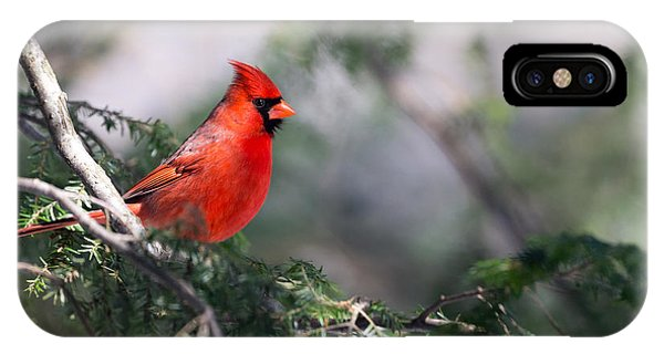 Northern Cardinal Red IPhone Case
