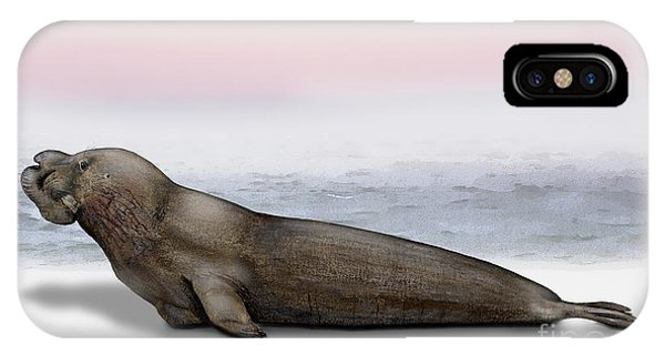 Northern Elephant Seal Mirounga Angustirostris Male - Marine Mammal - Seeelefant IPhone Case