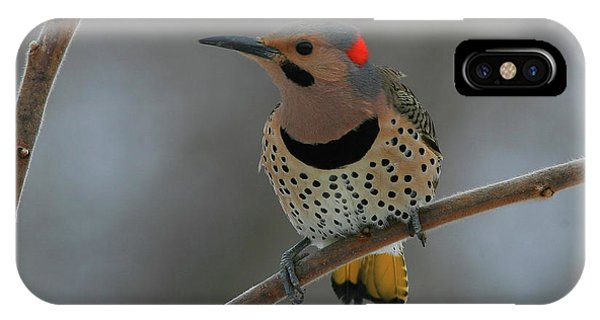 Northern Flicker iPhone Case - Northern Flicker by Bruce J Robinson