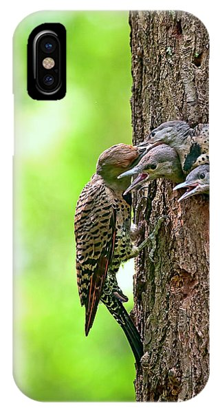 Northern Flicker iPhone Case - Northern Flicker Family by Sharon Talson