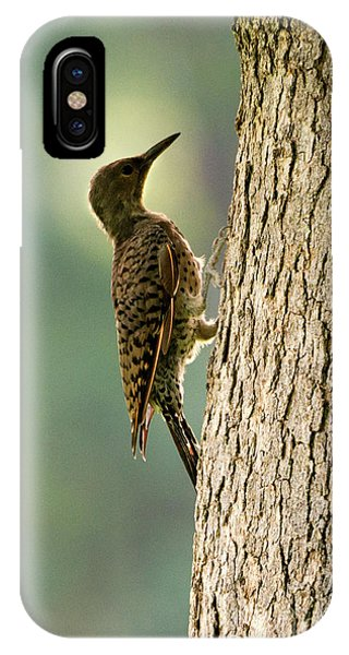 Northern Flicker iPhone Case - Northern Flicker Halo by Mike Dawson