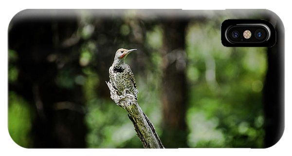 IPhone Case featuring the photograph Northern Flicker by Jason Coward